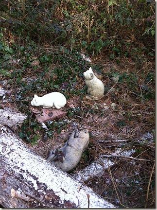 cat cemetery 2013