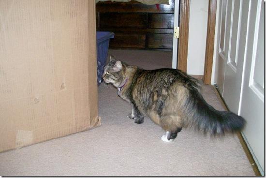 opie inspecting box