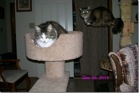zeke and opie cat trees