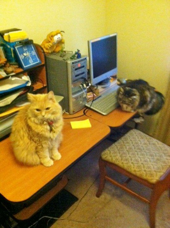 Marigold and opie on computer table