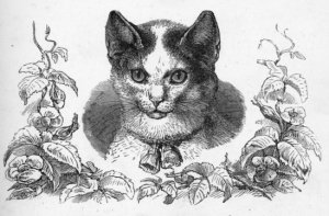 19th Century Cat Drawings_002 550