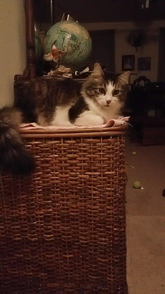 2015-01-13_Zeke laundry basket nmd