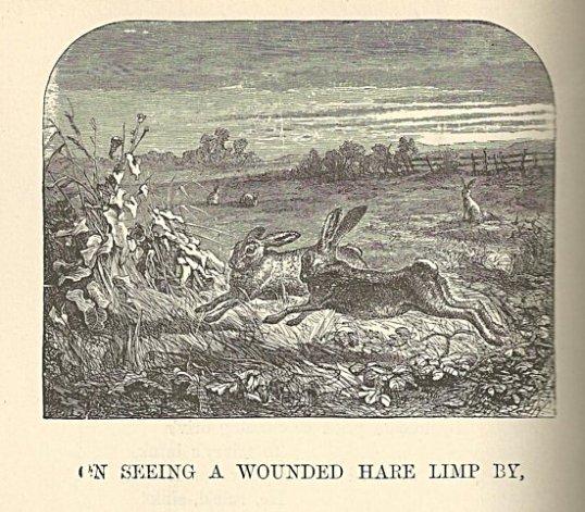 hare burns 550
