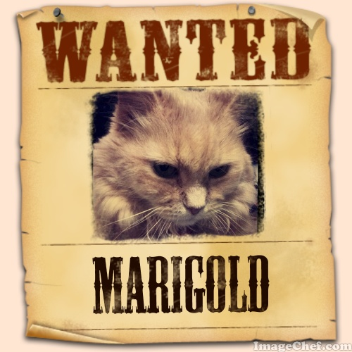 Marigold wanted poster