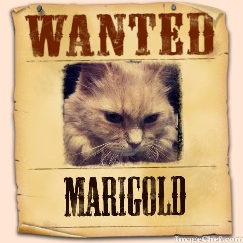 Marigold wanted poster