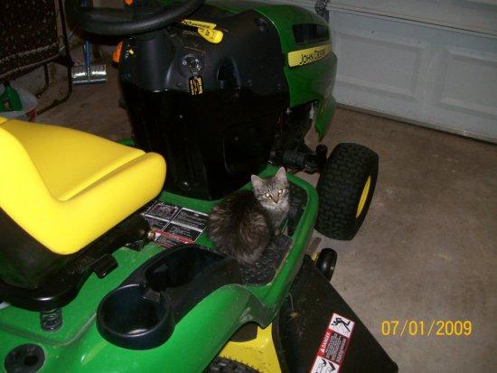Opie the Cat