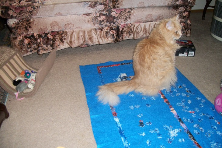 Marigold sitting on puzzle on floor