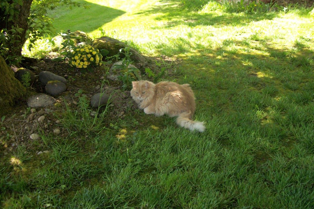 Marigold outside