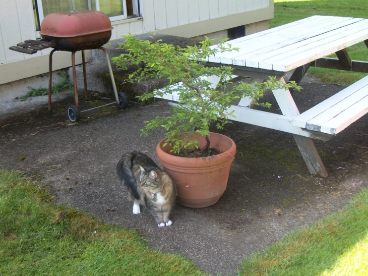 Opie the cat by picnic table