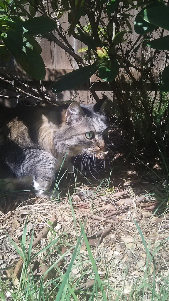 Opie stalking
