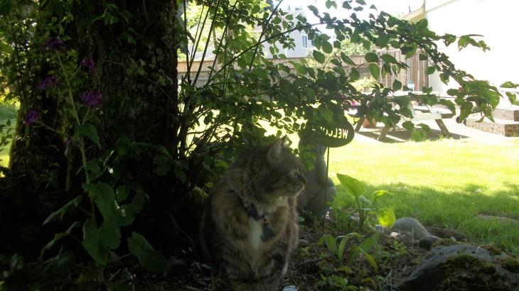 Opie under tree