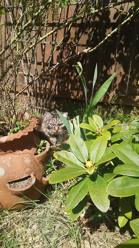 Opie by flower pot