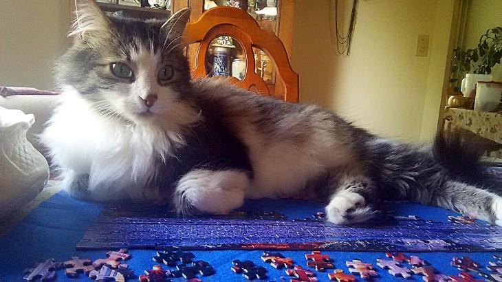cat 9h puzzle