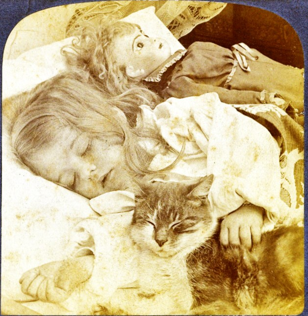 stereoview girl and cat