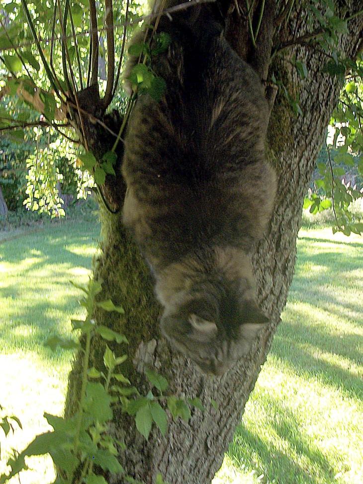 Opie in tree