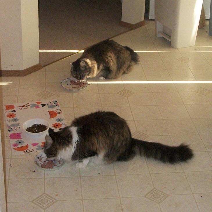 Zeke and Marigold eating