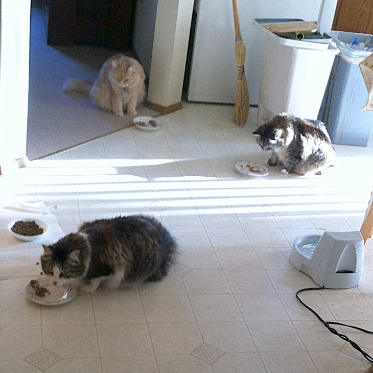 cats eating breakfast