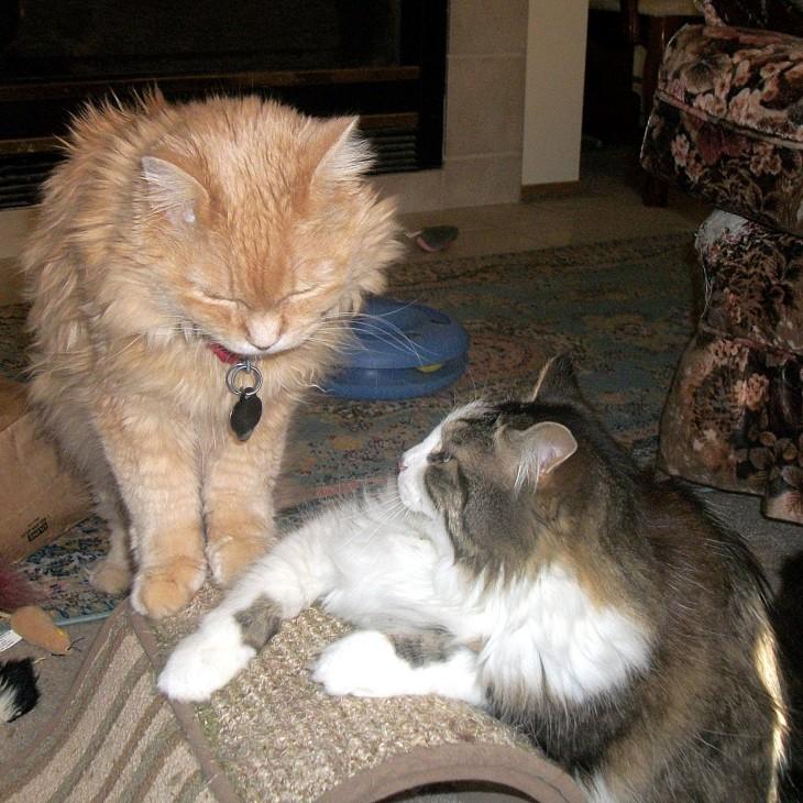 Marigold and zeke