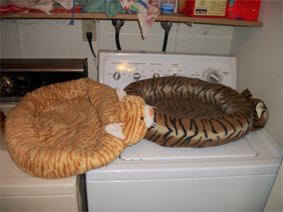 cat beds and washing machine
