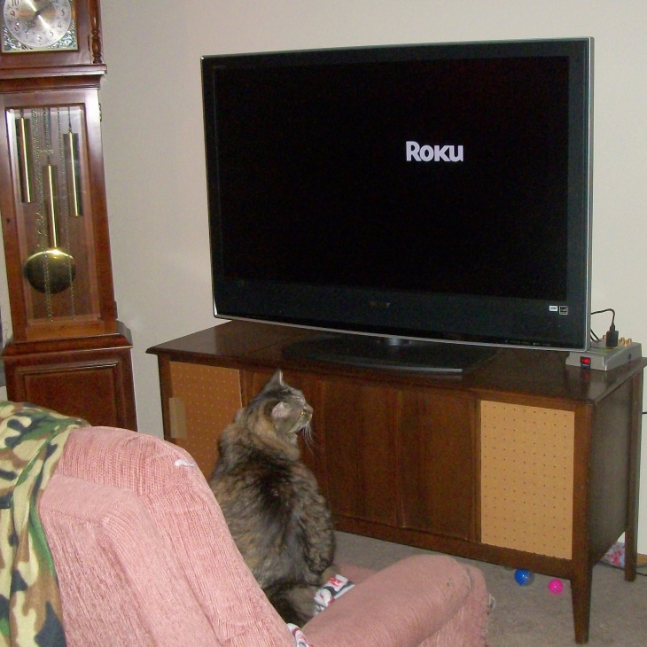 cat and tv
