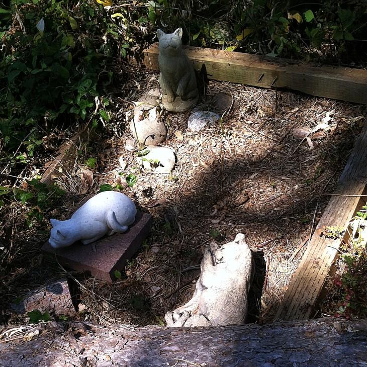 cat cemetery