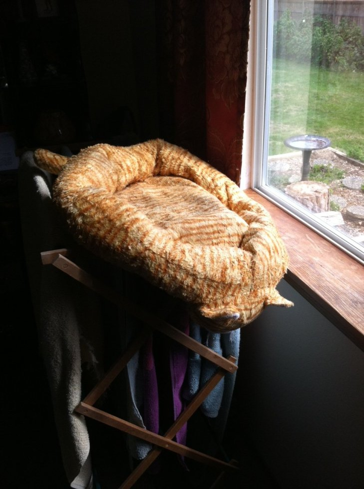cat bed drying