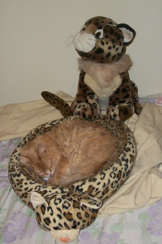 cat asleep by cheetah stuffed