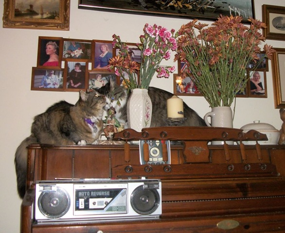 cats and flower vases