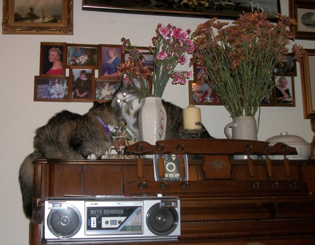 2 cats and flower vases