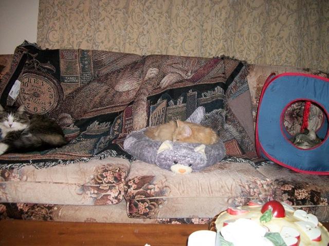 3 cats on sofa