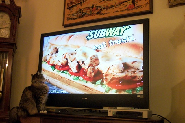 cat viewing Subway sandwich