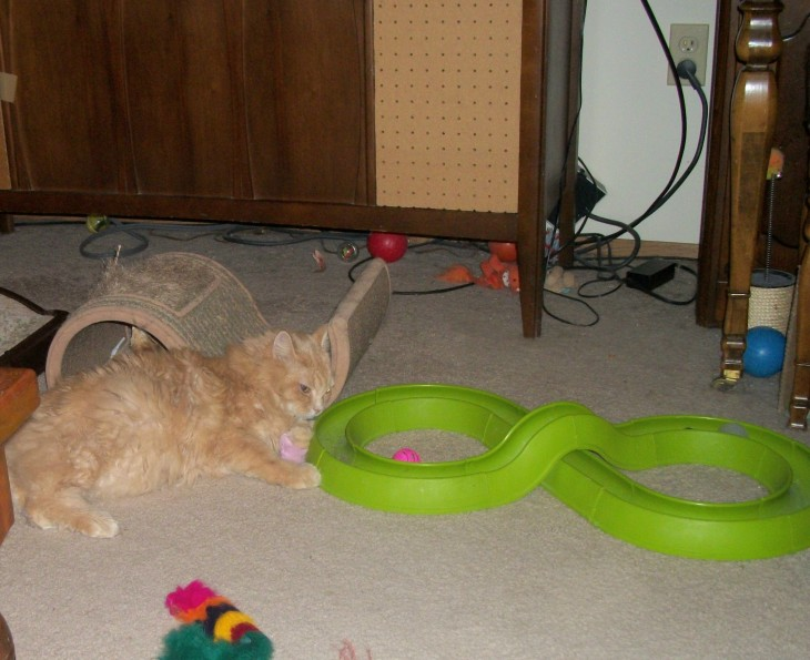 cat and turbo track