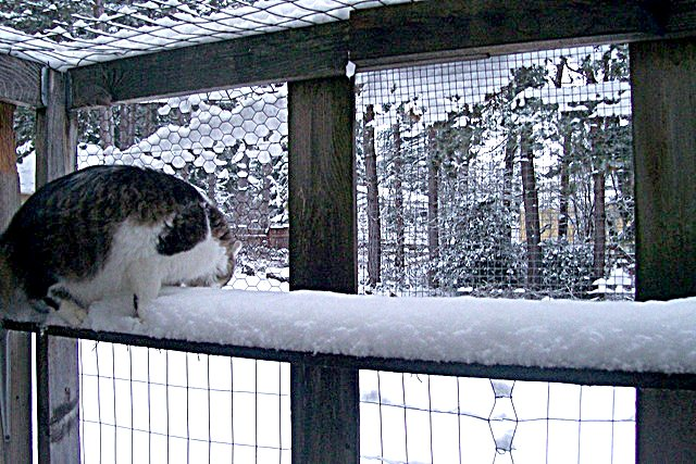 cat in catio in snow