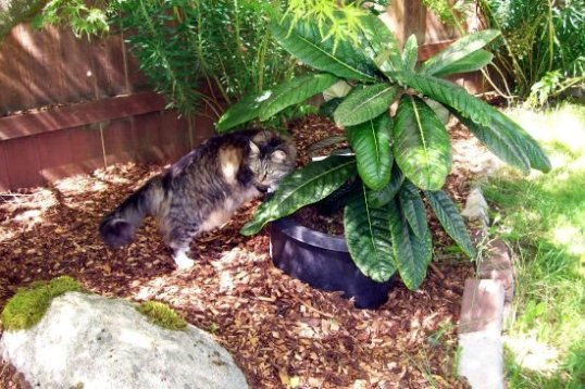 cat by plant
