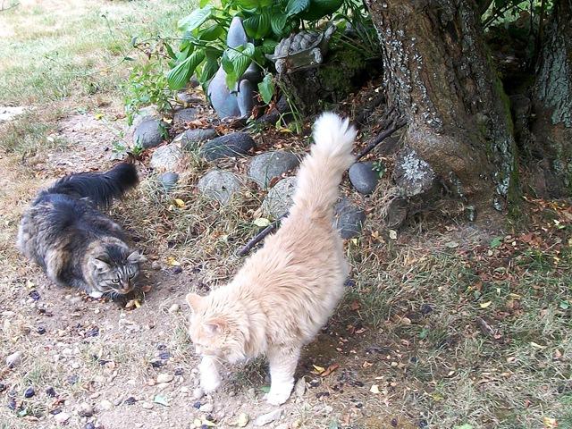 2 cats outside