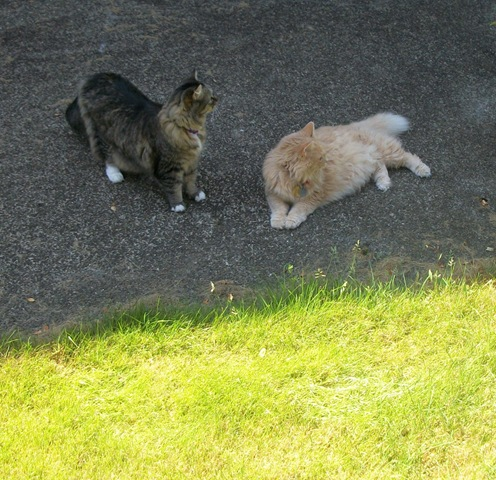 2 cats outside