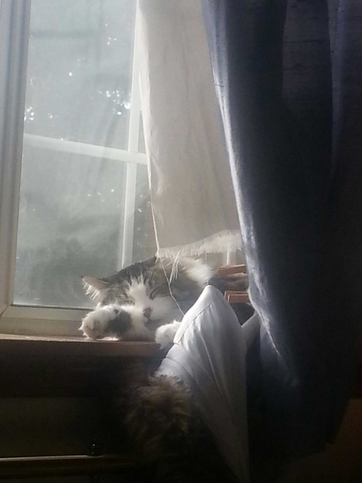 cat on windowsill