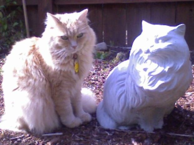 Marigold and stone cat