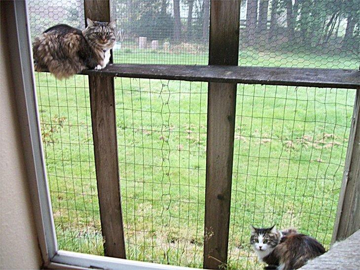 2 cats in catio