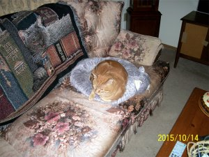 Scooby in catbed