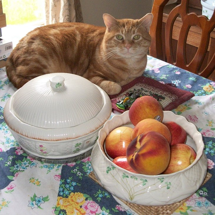 Scooby on table with fruit
