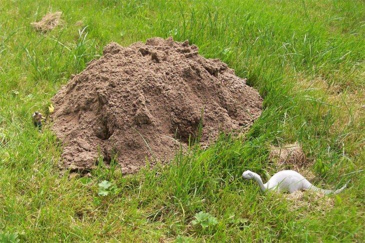 molehills kate dinosaur