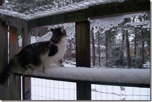 Zeke in snow