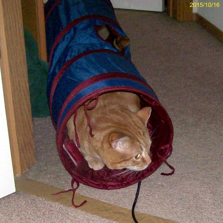 cat in twinkle chute tunnel
