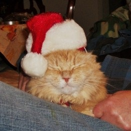 Marigold wearing Santa hat