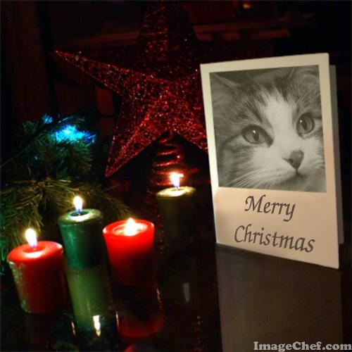 Zeke on Christmas card