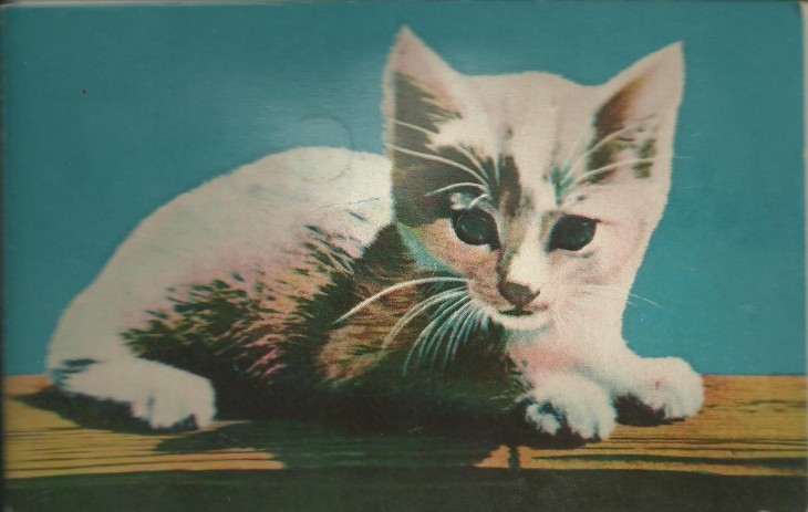 Squeaky cat postcard