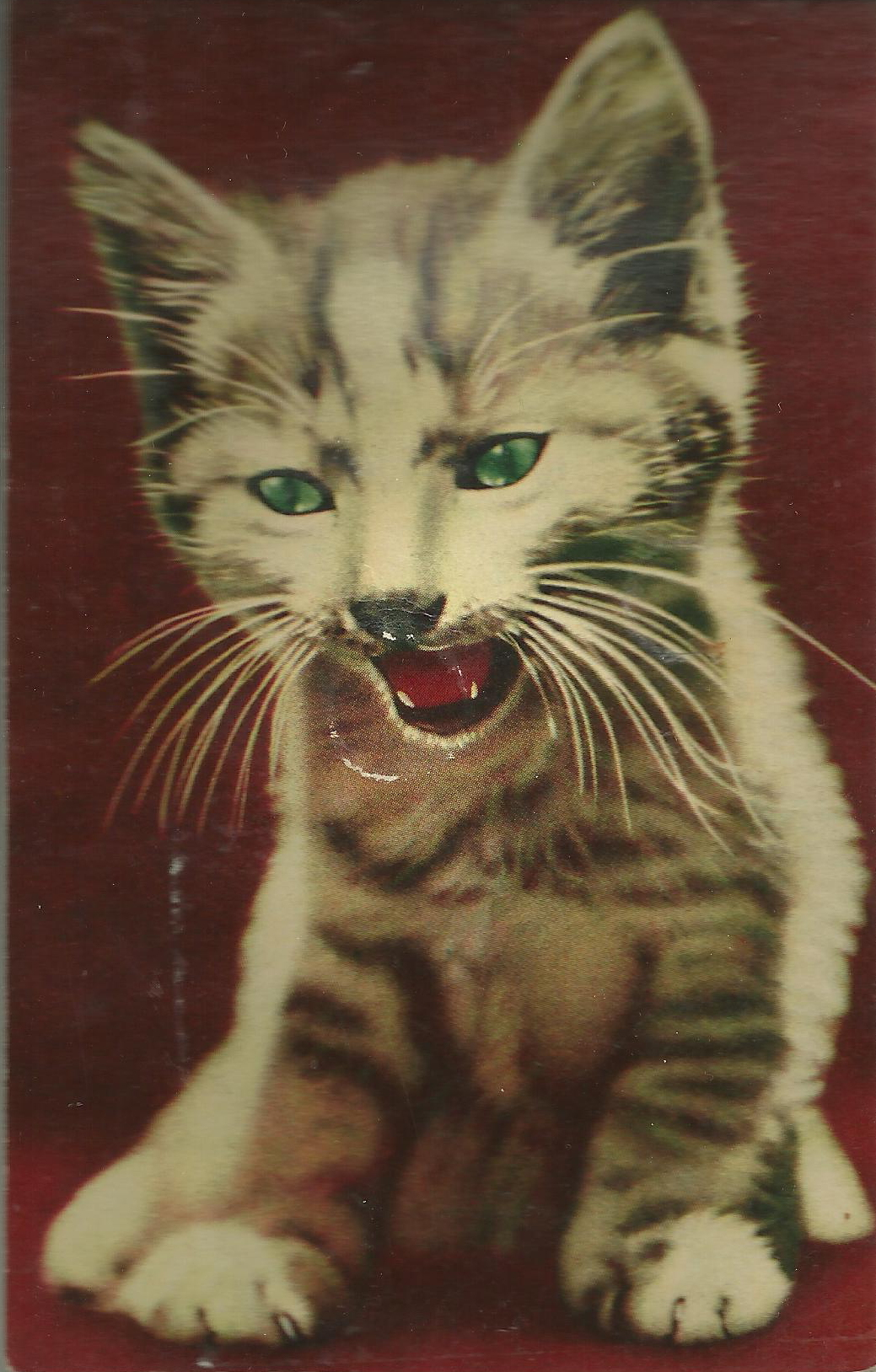 squeaky cat postcard