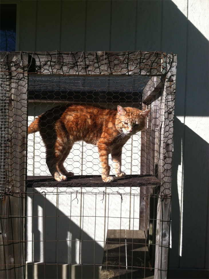 Scooby cat catio