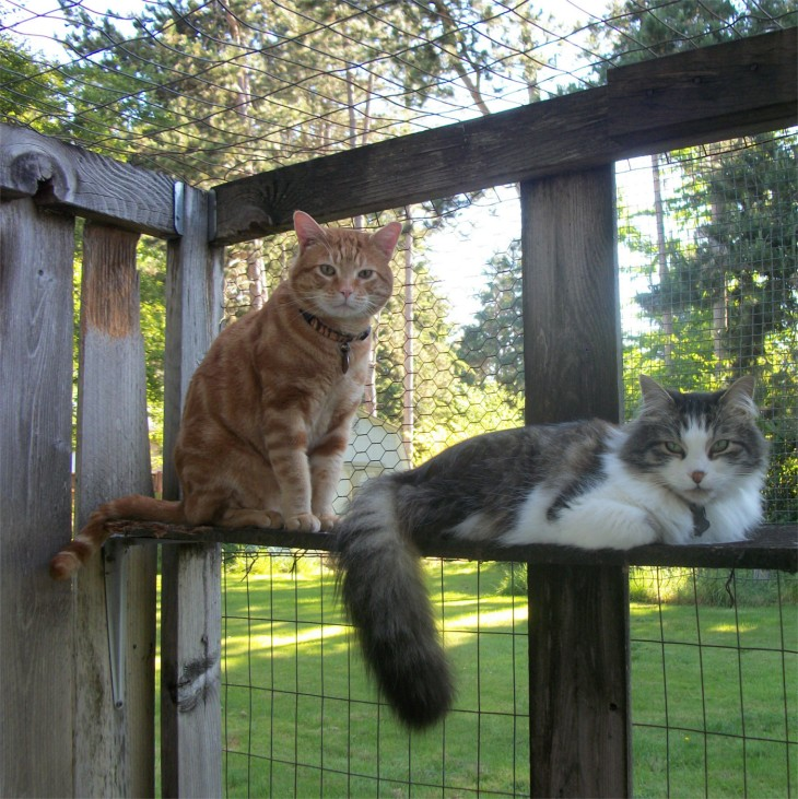 Scooby Zeke catio cats